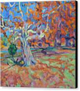 Platan Tree In Sunny Autumn Canvas Print