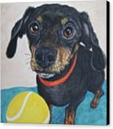 Playful Dachshund Canvas Print by Megan Cohen