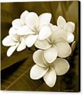 Plumeria - Brown Tones Canvas Print