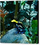 Poison Dart Frog Poised For Leap Canvas Print by Douglas Barnett