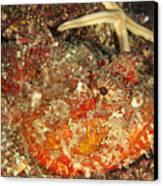 Poisonous Stone Fish, Scorpaena Mystes Canvas Print by James Forte