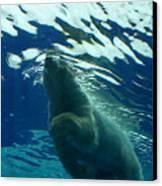 Polar Swim Canvas Print