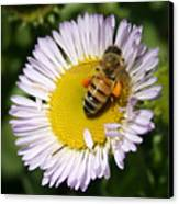 Pollen Harvest Canvas Print