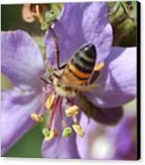 Pollinating 4 Canvas Print