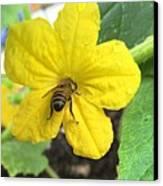 Pollinating Cucumber 1 Canvas Print