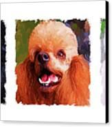 Poodle Trio Canvas Print by Jai Johnson