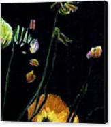 Poppies 2 Canvas Print by Dana Patterson