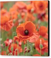 Poppies H Canvas Print
