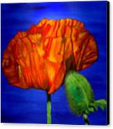 Poppy And Bud Canvas Print