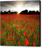 Poppy Field At Sunset Canvas Print by Doug Chinnery