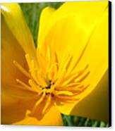 Poppy Flower Close Up Macro 20 Poppies Meadow Giclee Art Prints Baslee Troutman Canvas Print
