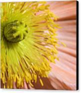 Poppy Whorls 1 Canvas Print