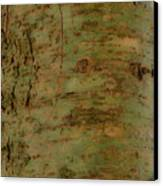Pores Of Life Canvas Print by Douglas Barnett