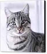 Portrait Gray Tabby Cat Canvas Print