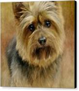 Portrait Of A Silky Terrier Canvas Print by Stephanie Calhoun
