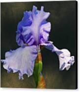 Portrait Of An Iris Canvas Print
