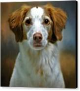 Portrait Of Gracie Canvas Print by Stephanie Calhoun