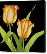 Posing Tulips Canvas Print