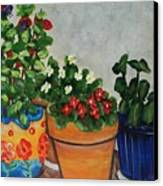 Pots Showing Off Canvas Print