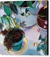 Potted Plants Canvas Print by Diane Ursin