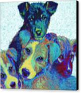 Pound Puppies Canvas Print by Jane Schnetlage