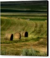 Prairie Grace Canvas Print