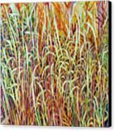 Prairie Grasses Canvas Print by Helen Klebesadel