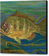 Predatory Fish Canvas Print by Anna Folkartanna Maciejewska-Dyba