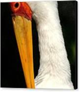 Preening Stork Canvas Print