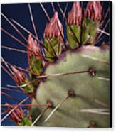 Prickly Buds Canvas Print by Kelley King