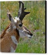 Pronghorn Buck Profile Canvas Print by Karon Melillo DeVega