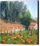 Pumpkin Fields At Bates Nut Farm Canvas Print