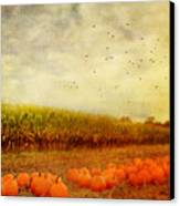 Pumpkins In The Corn Field Canvas Print by Kathy Jennings