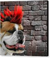 Punk Bully Canvas Print by Christine Till