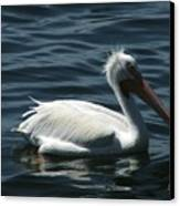 Punk Pelican - Side View Canvas Print