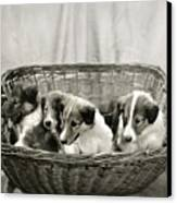 Puppies Of The Past Canvas Print by Marilyn Hunt