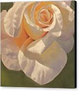 Purity Rose Canvas Print