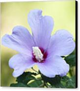 Purple Althea Canvas Print by Kenneth Albin