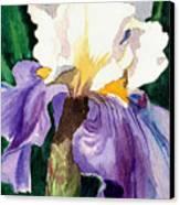 Purple And White Iris Canvas Print by Janis Grau