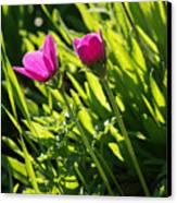 Purple Anemone Canvas Print by Arik Baltinester