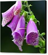 Purple Bells Horizontal Canvas Print