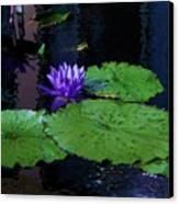Purple Blue  Lily Canvas Print