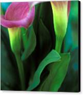 Purple Calla Duet Canvas Print by Kathy Yates