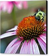 Purple Cone Flower And Bee Canvas Print