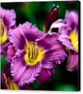 Purple Day Lillies Canvas Print