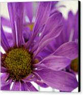 Purple Delight Canvas Print