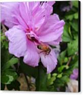Purple Flower And Friend Canvas Print by Guy Ricketts
