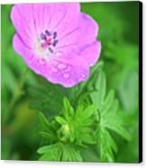 Purple Geranium Flower Canvas Print by Neil Overy
