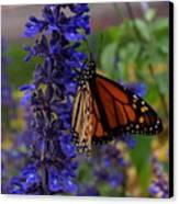 Purple Monarch Canvas Print