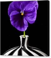 Purple Pansy Canvas Print by Garry Gay